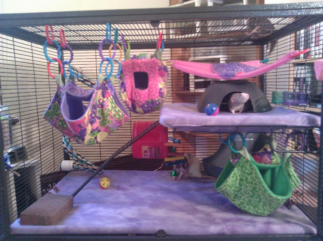 Cage Inspiration Brittney S Royalty Rats